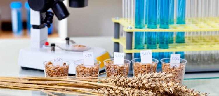 korn liegt auf einem tisch neber reagaenzglaesern in einem mikrobiologischem labor